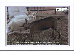 CURSO DE INICIAÇÃO A CAPRINOCULTURA E OVINOCULTURA 09 e 10/04/2016